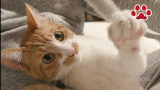 久しぶりに まやと遊んだ【瀬戸のまや日記】I played with cute cat Maya