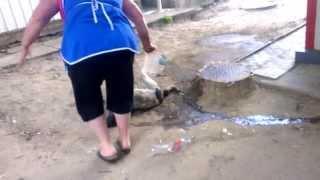 04.03.2014 отравили собаку..кишинев Молдова