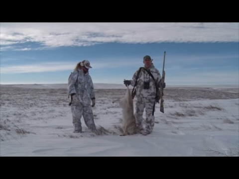 Windy, Cold South Dakota Coyote Hunt! Even My Coyote Hunting Doesn't Always Go As Planned!