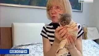 Маленького котенка замучили до полусмерти.flv