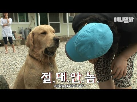 Dog Taebong which is always holding a stone in its mouth♡