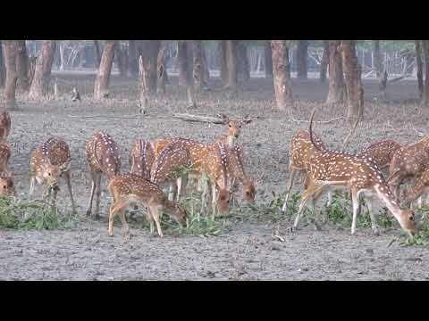 sundarban tour with rajdhani travels & tourism