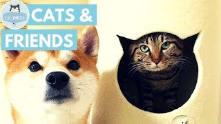 Cute Cats With Lovely Friends thumbnail