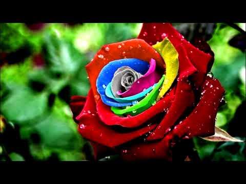 Фото самых красивых и редких цветов нашей планеты