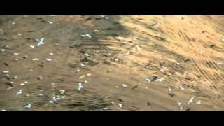 Jonathan Livingston Seagull - Trailer