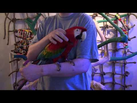 hqdefault The Ultimate List Of 43 Macaw Species With A Focus On Large Macaws