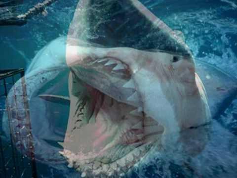 Attaque de requin en direct horrible les dents de la - Grand poisson de mer ...