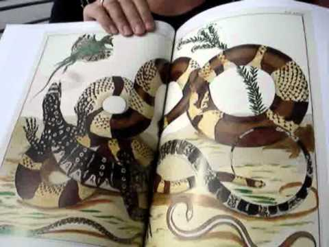 ALBERTUS SEBA, CABINET OF NATURAL CURIOSITIES - YouTube