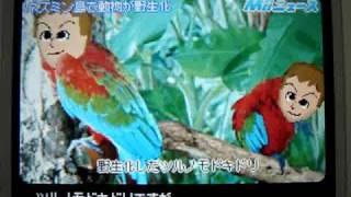 バーコンマスターのトモコレ No.001 今回は『Miiニュース』! 鳥になっ...