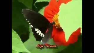 .--Aasha Deepam--. Malayalam Christian Devotional Song!!! (w_ Lyrics)(1).mp4