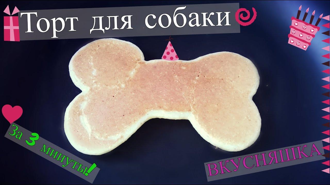 Вкусняшка для собаки  Торт для собаки - YouTube