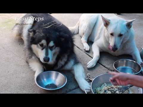 Alaskan Malamute | German Shepherd | Chicken Drumsticks Meal For Dogs