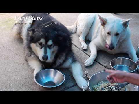 Alaskan Malamute   German Shepherd   Chicken Drumsticks Meal For Dogs