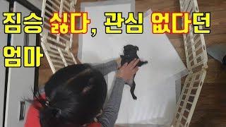 [강아지 Olly] 새끼 강아지 싫다던 엄마 반응