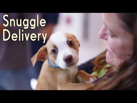 WATCH: Adorable Puppy Visits Relieve Stress in the Workplace
