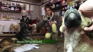 Бродячих собак в Рязани становится меньше