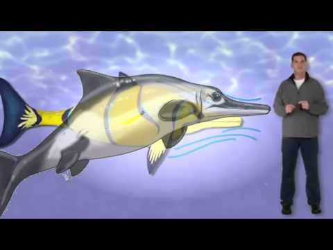 Dinosaur Discoveries Ophthalmosaurus - YouTube