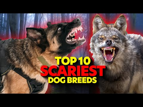 Top 10 SCARIEST Guard Dog Breeds!