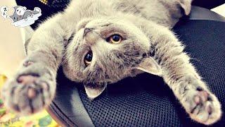 CAT SLEEPING | КОШКА СЛАДКО СПИТ