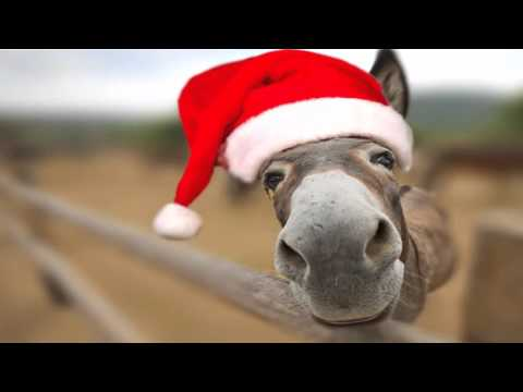 Dominick Donkey - Italian Christmas Song [Lou Monte] :: Animal Singer Funny Videos ::