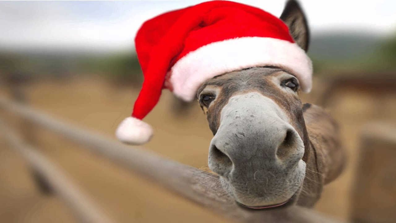 Dominick Donkey - Italian Christmas Song [Lou Monte] :: Animal ...
