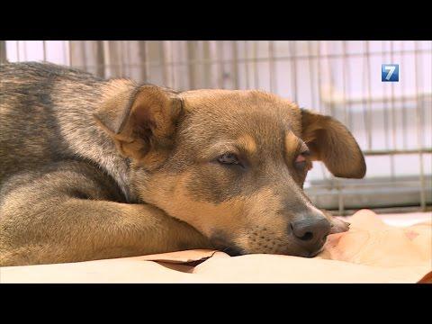 В Вологде расследуют нападение живодеров на собаку.