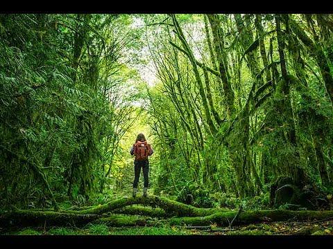 Super Motivational Nepali Speech about comparing life with Jungle by Raju Khadka