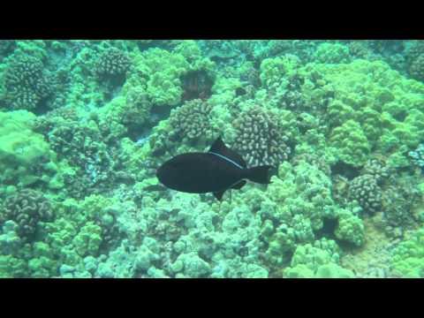 MAUI HAWAII VACATION: MOLOKINI MAUI SNORKEL ADVENTURE