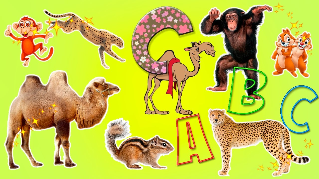 learn alphabet with cartoon animals for children | abc letter c