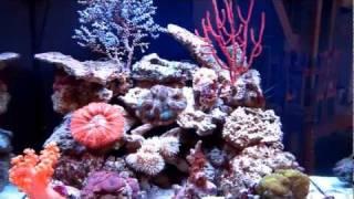 Морской аквариум.mp4(, 2011-11-12T03:50:03.000Z)