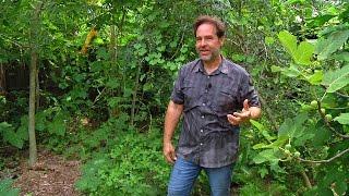 Permaculture Paradise: Alex Ojeda's Fertile Back Yard!