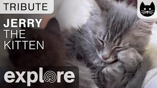 Tribute For Jerry from Kitten Rescue Los Angeles