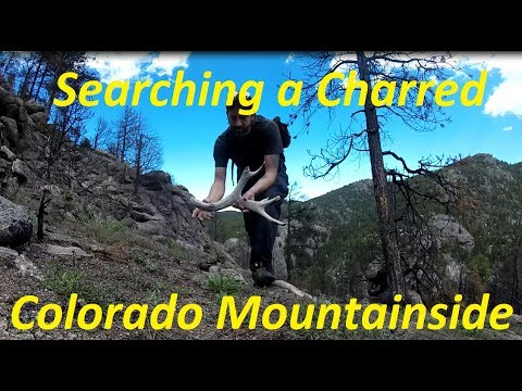 Searching a Charred Colorado Mountainside