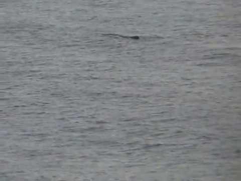 Кит в Гвинеском заливе. / Whale @ Gulf of Guinea