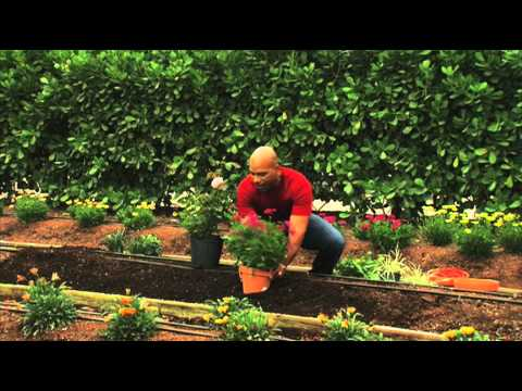 How To Plant Perennial Gardens Youtube