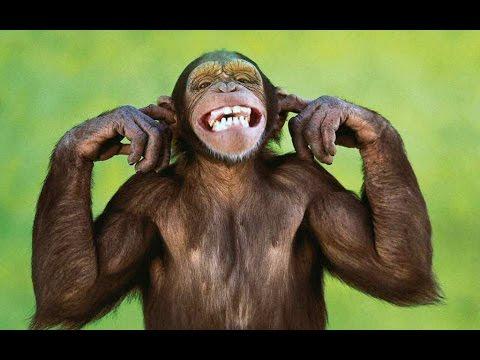 Video Monos Graciosos Funny Monkeys Youtube