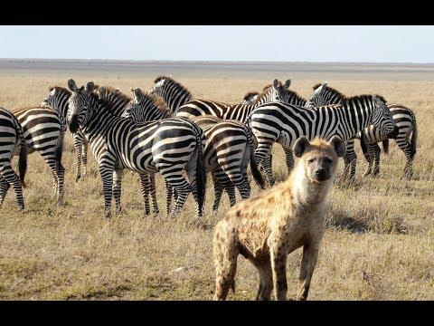 Tanzania Small Group Touring