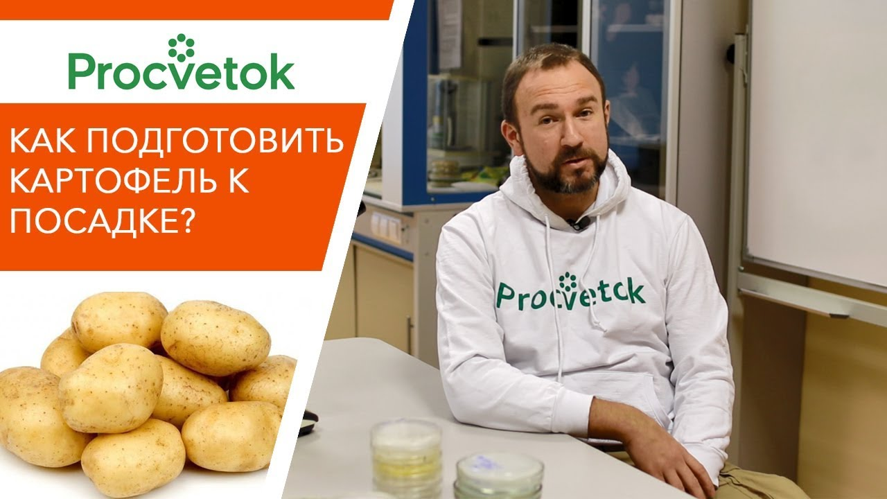 Особенности и секреты подготовки картофеля к посадке