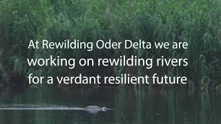Rewilding Oder Delta: River Restoration
