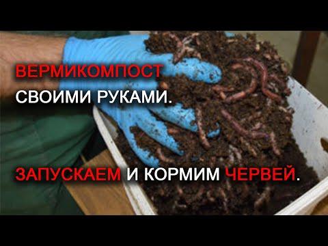 Удобрение ценней навоза! Вермикомпост своими руками. Запускаем и кормим червей. Часть 2.