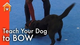 Teach Your Dog To Bow