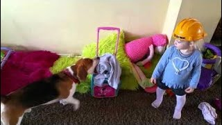 Funny dog and baby can't agree what to pack Funny Dogs thumbnail