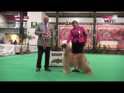 Birmingham National Dog Show 2016 - Hound group Veteran