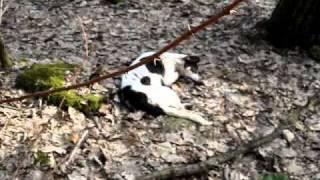 Martwe psy znalezione w gminie Nadarzyn, koło Ksieżaka.