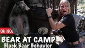 BEAR At Spirit Forest!! Learn About Behaviors of the Colorado Black Bear - Season 2 -Ep#83