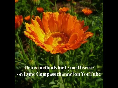 How we detox from Lyme Disease & deal with Herxheimer reactions