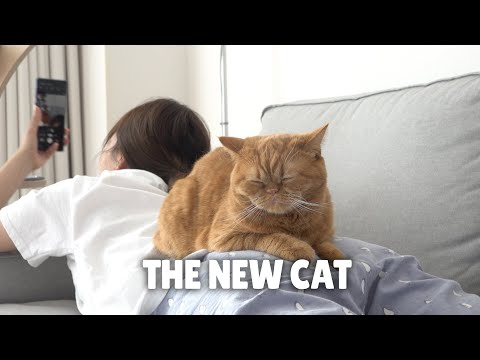 The New Cat | Kittisaurus