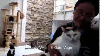 El lenguaje de los gatos, Gato Vago explica