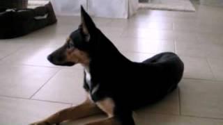 Mischlingshunde Welpen In Trebur