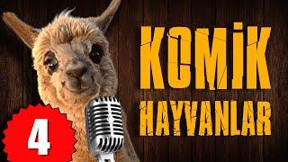 Pisi TV Komik Hayvanlar 4 - Bu Hayvanlar Konuşuyor